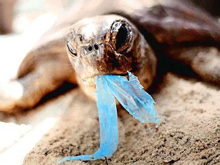 Een schildpad die plastic aan het eten is